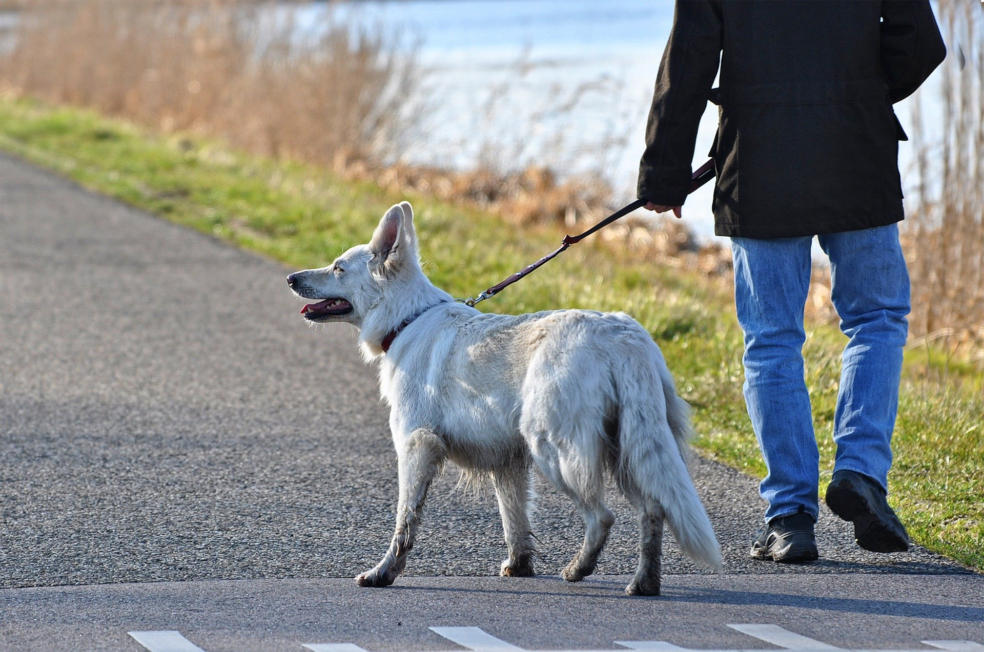 Gaatur med hund